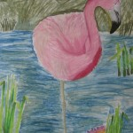 Flamingo pastel, Zoo week