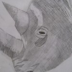 Rhino sketch, Zoo week